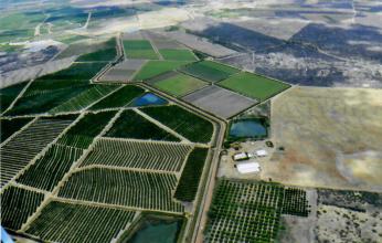 bestFrut - fazenda